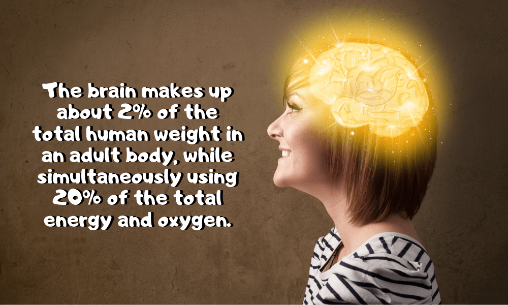 The brain usually makes up 2% of the total human weight in an adult human body, while simultaneously using 20% of the total energy and oxygen.